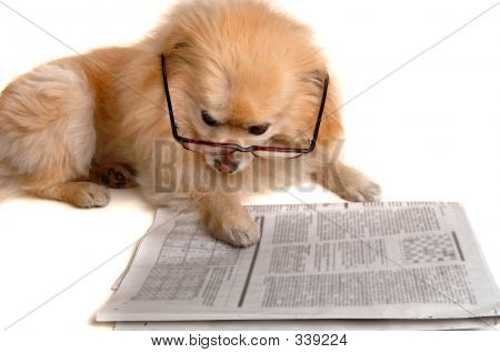 Waggy Tails Resort :: Lets Discuss Kennel Cough